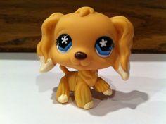 Littlest PET Shop Cocker Spaniel 748 Blonde Dipped Ears Star Eyes Puppy DOG   eBay
