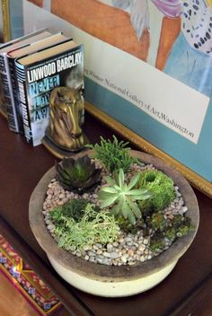 DIY_succulent_garden_miss_information
