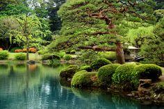 Calm Zen Lake and Bonzai Trees in Tokyo Garden - Fototapeten & Tapeten - Photowall
