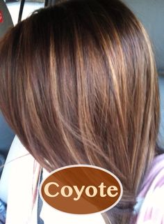 Dark Brown Hair With Caramel Highlights This Is Gorgeous