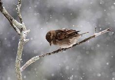 Alès neige (6) - Oiseaux et Compagnie