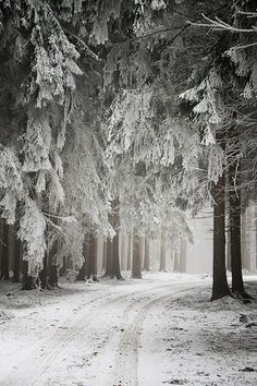maybe the path to Narnia?