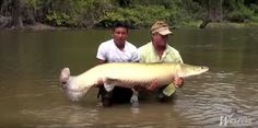 An Epic Monster Discovered in Mysterious and Wild Amazon River Area