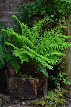 Hollow Tree Trunk Ideas Yards 66 New Ideas Ferns, Plants, Woodland Garden, Back Gardens, Ferns Garden, Shade Plants, Landscape, Tree Stump Planter, Outdoor Decor Backyard