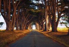 деревья, аллея, дорога