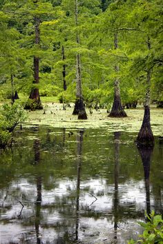 #10 Mingo & Duck Creek: Mingo National Wildlife Refuge in Puxico, Missouri - You can enter the refuge at the following locations: Bluff Road at Highway 51, Schoolhouse Access (Highway 51), Mingo Job Corps (Highway T), Rabbit Ridge Road (County Road 518), and McGee Gate (County Road 513). Entrance permits are required year-round for entering the refuge. The permits are available at the refuge office.  Daily Permit ($3.00; available at the entrance kiosks)