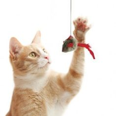 Cat toys Australia is right option to keep you loving cat fit and healthy http://goo.gl/p7iBMR