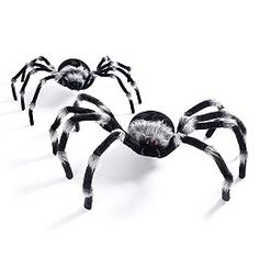 Large and Giant Furry Spiders