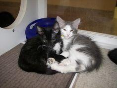 Kitties hugging