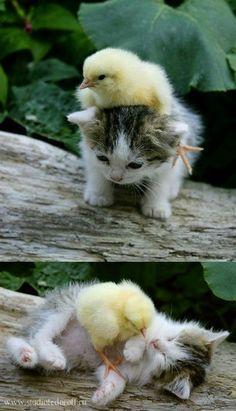 Mini Friends.