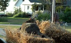 cat on hay bales