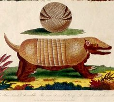 1800-1820 Antique print.Hand colored copper plate.Encyclopedia