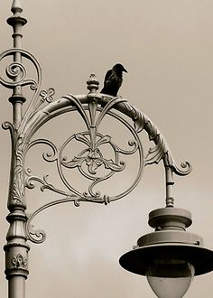The Raven by Louise Fahy  A lone raven rests atop a lamp post in Dublin, Ireland