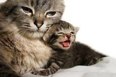 「แมว」の画像検索結果