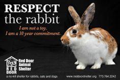 rabbits http://www.rabbitwelfare.co.uk/