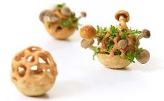 edible 3-D printables - mushrooms and sprouts mature over time