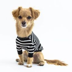 Make your dog très chic with the Brittany Dog Shirt! The classic white on black stripe makes this a must-have staple in your dog fashion collection. Black White Stripes, Black And White, Dog Shirt, Shiba Inu, Maltese, Brittany, Poodle, Chihuahua, Your Dog