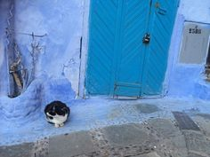 A cat & blue door in Chefchaouen! Morocco, Bucket, Cats, Blue, Painting, Color, Gatos, Painting Art, Colour