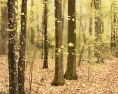 Autumn Escape  Yellow Fall Photography  Leaves by donnageissler, $30.00