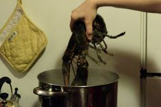 Simple steps to cooking a live lobster perfectly every time! How To Cook Liver, Live Lobster, Cooking, Kitchen, Kitchens, Cuisine, Brewing, Cucina, Cook