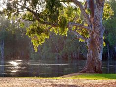 Wahgunyah - the Murray River end of the Murray to Mountains Rail Trail  (Victorian town opposite Corowa in NSW)