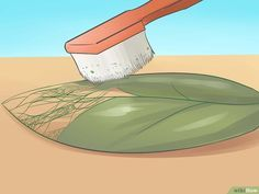 How to Make Skeleton Leaves: 12 Steps (with Pictures) - wikiHow
