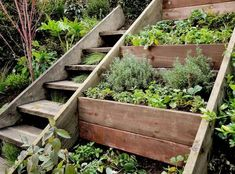 Wooden Outdoor Stairs and Landscaping Steps on Slope, Natural Landscaping Ideas Retaining wall herb garden on a steep slope next to a stair case. We need something like this in our back yard. Sloped Backyard Landscaping, Natural Landscaping, Sloped Yard, Landscaping Ideas, Backyard Ideas, Terrace Ideas, Steep Hillside Landscaping, Inexpensive Landscaping, Residential Landscaping