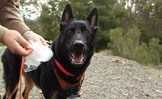 This extraordinary rescue dog from the Tahoe area recently made the national news for his heroic efforts!