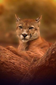 Puma by Alejandro Moyano