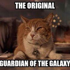 Who else remembers Orion from #MeninBlack? | #PawNation #Animals #Meme #AnimalMeme