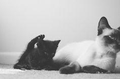 {Luna & Pearl} by Lisa | goodknits, via Flickr