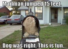 Hilarious images of the day, 101 pics. Dog Was Right, This Is Fun