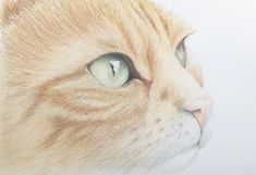 Original pet portrait by Jill Aspin Oil Painting On Canvas, Watercolor Paintings, Original Paintings, Ballet Art, Love Your Pet, Ginger Cats, Dog Portraits, Fine Art Prints, Photo Galleries