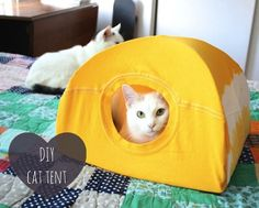 DIY Upcycle Cat Tent/ House made from 2 wire hangers, a piece of cardboard and an old t-shirt.  What fun!  I love how easy it would be to wash this.