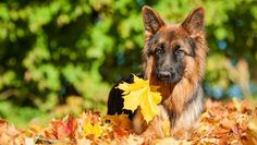 Getting Ready for Fall - Is your pet ready for the new season?