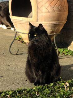 Black cat   Mocha looks for Winter