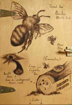 "Bees: #Bees. #bees #bee Bee art, bee prints, bee, bees. ""If bees disappeared from the earth, man would have four years to live"" -Einstein Please, help us tell the US government, Home Depot, Lowes and the media that we DO NOT SUPPORT Bee killing pesticides our governtment just approved. http://action.foe.org/p/dia/action3/common/public/?action_KEY=14141"