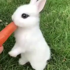 Golden Retriever Discover Cute Rabbit Eating Carrot The diet has begun. Baby Animals Super Cute, Cute Baby Bunnies, Cute Little Animals, Cute Funny Animals, Cutest Animals, Baby Animals Pictures, Cute Animal Photos, Cute Animal Videos, Cute Animals Images