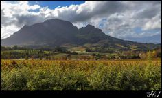 1 June 2014 Sunday - Winter Autumn in the Paarl Winelands - view from our home. Majestic mountains, orange, red, brown leaves in the orchards and vineyards....blissful.  Helen Sousa Photography.