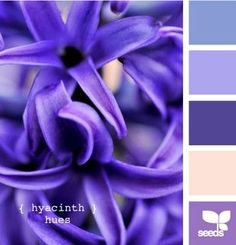 hyacinth tones