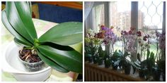 Bulb Flowers, Ikebana, Bonsai, House Plants, Flora, Home And Garden, Herbs, Table Decorations, Gardening