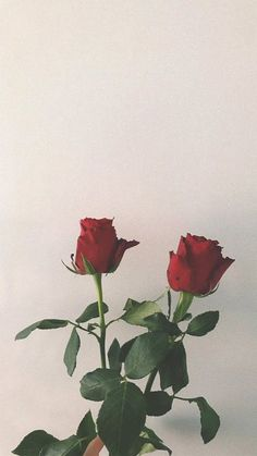 34 Ideas Flowers Background Wallpapers Aesthetic For 2019 Flower Background Wallpaper, Flower Phone Wallpaper, Flower Backgrounds, Aesthetic Roses, Red Aesthetic, Wallpaper Bonitos, Flower Girl Pictures, Cactus E Suculentas, Plants Are Friends
