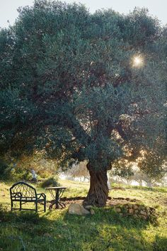 What Pasti calls his ''office'' at the foot of one of the garden's old olive trees. A copse of fig trees lies just beyond. (Photo: Ngoc Minh Ngo)