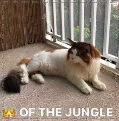 The Most Important Cat Pictures Of All Time. Cute Cat - Free images at Pinterest. We all love an excellent cute cat picture avoid we. Whether you're at your workplace and browsing cat photographs to get you through your day.
