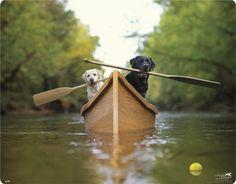 cani che remano