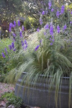 Verbena bonariensis, Larkspur and Mexican Feather Grass Texas Landscaping, Luxury Landscaping, Landscaping With Rocks, Outdoor Landscaping, Front Yard Landscaping, Backyard Patio, Rock Planters, Outdoor Planters, Galvanized Planters