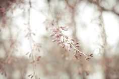 Blossom is here, Spring has finally sprung :) Coral Art, Coral Orange, Tree Photography, Digital Photography, Saatchi Online, Kew Gardens, Blossom Trees, Spring Is Here, Contemporary Artists