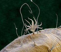 Microscopic views