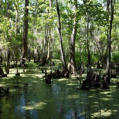 The 13 Most Beautiful Places in Louisiana You Didn't Know Existed