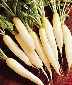 Crisp white flesh has a tantalizing, mild pungency.   Protects cucumbers from cucumber beetles - plant in hill with, allow to go to flower